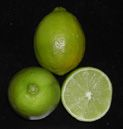 Citrus latifolia, 'Bearss' lime