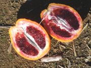 'Doblefina' blood orange