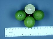 Mexican lime