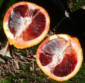 'Moro' blood orange