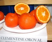 Clementine 'Oroval'