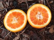 Ruby light blood orange