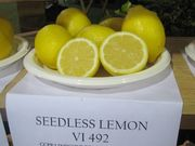 'Seedless Lemon' CCPP  California