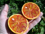 Light blood orange