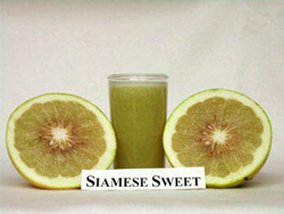 persimon hedelmä kalorit
