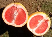 Star Ruby grapefruit