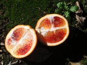 'Tarocco' blood orange