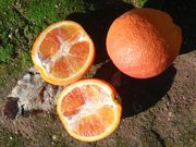 'Thermal Tarocco' blood orange
