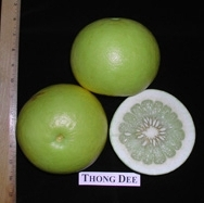 Thong Dee pomelo